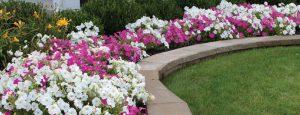 Planting Tips Austin's Lawn Care Kansas City