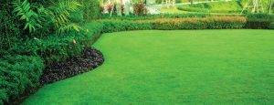 Fertilizing Turf with Austin's Lawn Care
