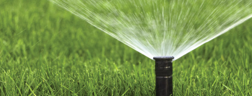 Managing Turf Drought with Austin's Lawn Care Blog