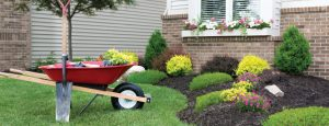 Landscaping Tips from Austin's Lawncare Blog