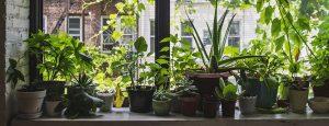 Winter Plants Indoors