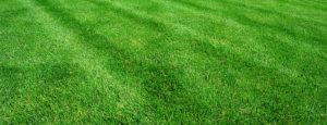 Lush green residential lawn